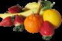 Vitamine und Mineralien – lebensnotwendige Nährstoffe für den menschlichen Organismus